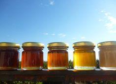 Στο Ορεινό Μέλι θα βρείτε ανάλογα με την εποχή: Μέλι Ποστοκαλιάς, Ανθέων, Καστανιάς, Θυμαρίσιο, Ελάτης, Πεύκου, Ερείκης και Κουμαριάς. Δοκιμάστε τα! All the honey varieties we collected this year!