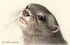 コツメカワウソ Flora And Fauna, Otters, Creatures, Illustration, Animals, Art, Animales, Art Background, Otter