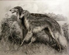 Dimitry Luchanov Russian. Not sure of the artist. Lovely though. Black and white print of borzoi dogs.
