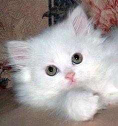 Cute Little Fluffy Kitten - Aww!