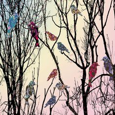 Vector Birds  Digital Art