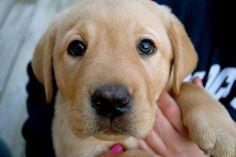 my favorite puppy