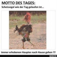 Motto des Tages | DEBESTE.de, Lustige Bilder, Sprüche, Witze und Videos