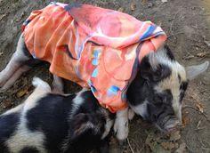 Carlotta snoozes | Ruth Dent Artist Pigs, Abstract, Artist, Animals, Summary, Animaux, Pork, Animal, Animales