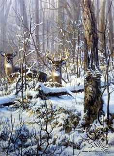Artist Don Kloetzke Unframed Whitetail Deer Print Stop Look and Listen | WildlifePrints.com