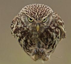 イギリスの飛行場跡地に住むフクロウさんたちのドヤッ!