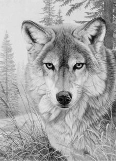 Wolf Coloring Page                                                                                                                                                                                 More