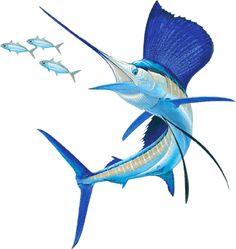 sailfish_contact