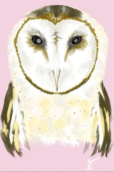 This is a barn owl! :) I drew this owl and imagined to put this on the front of a shirt which has rose or cream color. I inspired by these photos of owls, linked them.