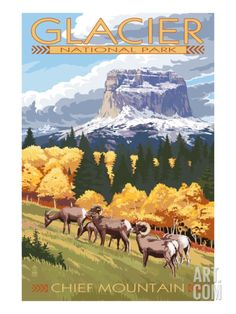 Chief Mountain and Big Horn Sheep - Glacier National Park, Montana Art Print by Lantern Press at Art.com