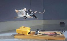 La souris acrobate que tous les geeks rêvent d'avoir !