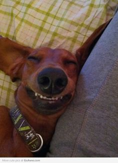 I think this dog is having a pleasant dream..