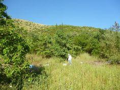 Τέλος άνοιξης στους πρόποδες του Ξηροβουνίου, στην οροσειρά της Πίνδου. Εδώ συλλέγουμε κατά το τέλος της άνοιξης ένα ανθόμελο από παλιούρι και ασφάκα.