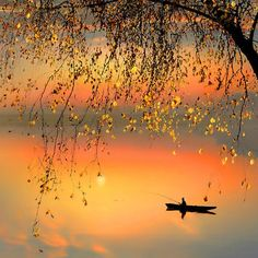 SEED OF PEACE ~ Spend time fishing for stillness, and you will catch peace; the cod within. :)