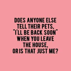 36 Funny Quotes And Sayings. Single Mom Meme Ideas of Single Mom Meme - Single Mom Ideas - Ideas of Single Mom Ideas - 36 Funny Quotes And Sayings. Single Mom Meme Ideas of Single Mom Meme 36 Funny Quotes And Sayings. Yorkies, Chihuahuas, Crazy Cat Lady, Crazy Cats, Crazy Dog, Silly Cats, Funny Bunnies, Lilo E Nani, Pet Sitter