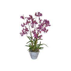 "37"" Orchid in Planter - Faux Arrangements (6.285 CZK) ❤ liked on Polyvore featuring home, home decor, floral decor, decorative accessories, purple, orchid pot, flower home decor, orchid flower pots and floral home decor"