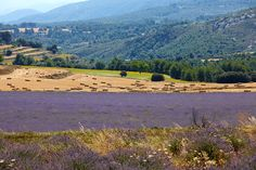Lavander in Natural Park Font Roja, Spain