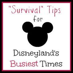 How to Survive Disne