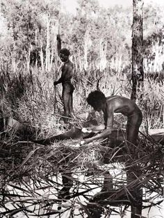 Blueswami - Old Photos of Australian Aborigines - Old Photos of Australian Aborigines - Collecting magpie geese eggs, Arnhem Land (?)