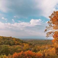 The leaf peepin is too good right now! Great photo from @wangsanjin #btownfall #visitbtown