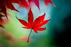 Autumn a season of reborn