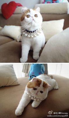 Snoopy-Babe