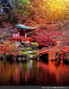 The warmth of fall colors transforms a Japanese garden into a fantasy landscape. 🔻 Check out the incredible works of Places To Travel, Travel Destinations, Places To Go, Amazing Destinations, Kyoto Japan, Japan Japan, Okinawa Japan, Image Japon, Wonderful Places