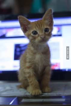 So it has begun.. my newly adopted kitten on my laptop...