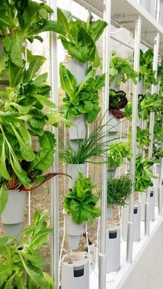 Experimenting with hydroponics in your home
