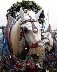 brewery horse – #Munich