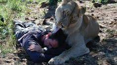 Resultado de imagen de animales feroces y salvajes