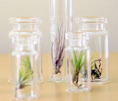 air plant terrariums... favor idea?