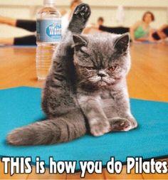 Cat doing Pilates? Perfection.