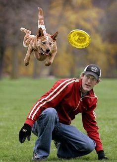 Dog & Frisbie