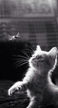 kitten trying to catch a flying insect