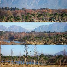 #gm #goodmorning #tirana #ready #for #newtree #more #o2  #sunnyday #liqeniartificial #artificiallake