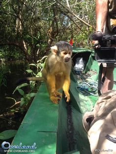 Ecco una scimmiettina molto dispettosa: sembra intenzionata a conoscerci ma... il suo obiettivo è un'altro: la mela che in un attimo ruba dalle mani di Anna! #Overland16