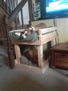 Awesome dog bunk beds when space is an issue. @Lacey Heyrman for when I have Blatz and Company in my room lol