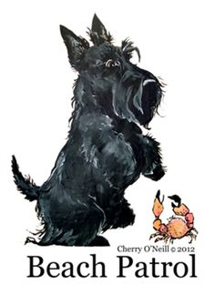 Scottish Terrier - Our next dog. I need a Scottie to go with my Westie. Some day...