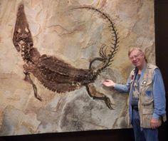 Fossil crocodile.