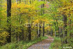Photo: Hiking Trail in the Woods