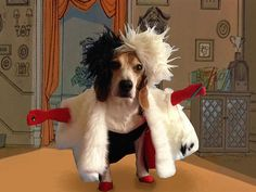 Cute Dog Dressed Up As Various Disney Characters