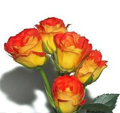 spray rose mambo #5 Mayesh Wholesale Florists - Search our Flower Library