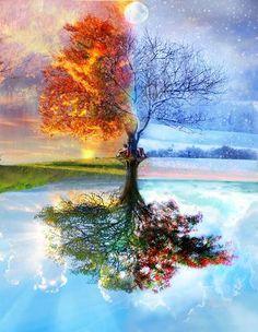 4 estaciones en un árbol!