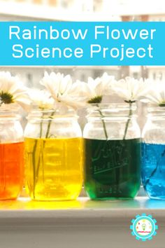 Learn about how plants drink water with capillary action in this super-fun rainbow color changing flowers experiment!