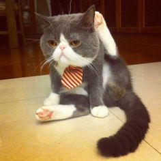 Los 10 gatos más adorables con cara chata en Instagram