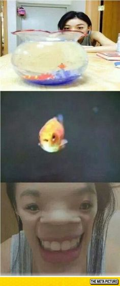 A Goldfish's Point Of View. That goldfish looks so scared!! XD