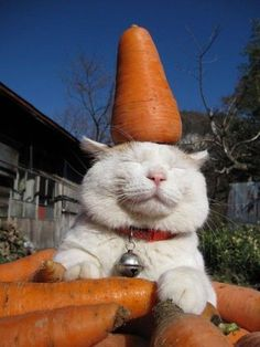 A smiling cat balancing a carrot on its head while also being surrounded by them.