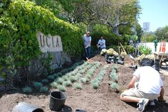 pictures of high schools where drought tolerant landscape was used - Google Search