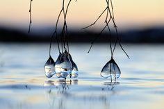 Ice drops by Kolbjorn Pedersen